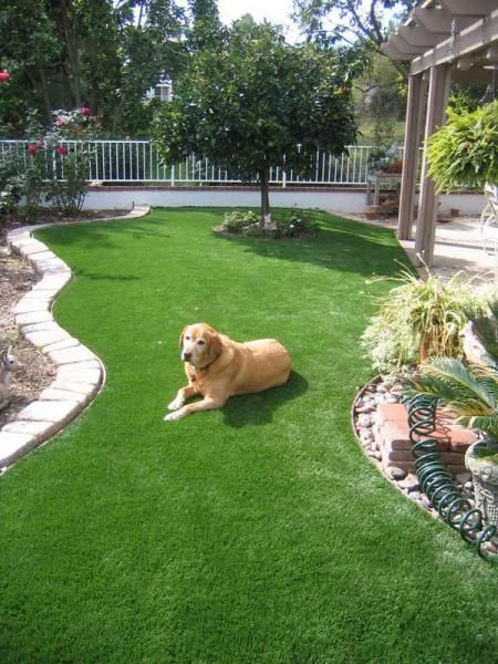 Fake Grass For My Backyard : going to have to get some fake grass for my whole yard one day