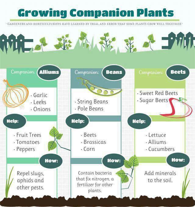 Companion plants Garden Farm Pinterest