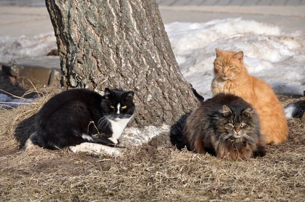 Pin by cheryl h on fabulous felinity pinterest The three cats