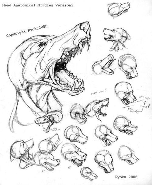 Анатомия собак рисунок
