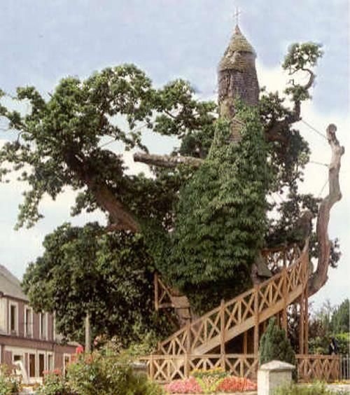 The Chêne-Chapelle of Allouville-Bellefosse is the most famous tree in France – actually, it's more than just a tree: it's a building and a religious monument all in one. In 1669, l'Abbe du Detroit and du Cerceau decided to build a chapel in a 500 years old or so oak tree made hollow by a lightning bolt. Now, parts of the tree are dead. Poles and cables support the aging tree. It may not survive. As a symbol, however, it seems that the Chapel-Oak of Allouville-Bellefosse may live on forever.