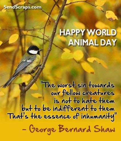 World Animal Day Scraps