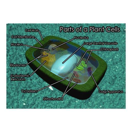 3d Plant Cell Diagram