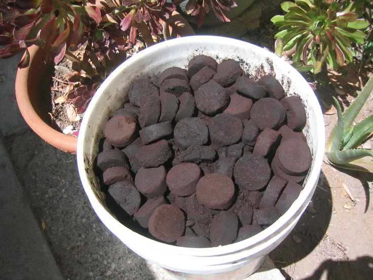 Gardening Tip Starbucks Gives Away Free Spent Coffee Grounds To Use As Compost For Your Garden