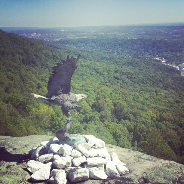 Eagle at #RockCity.