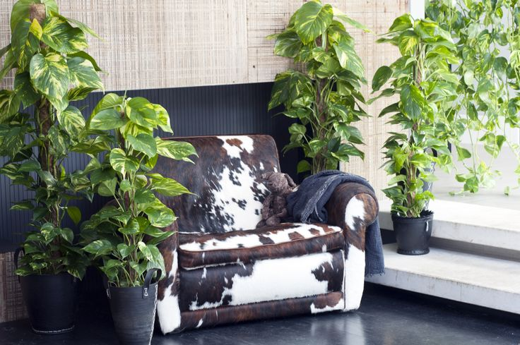 zimmerpflanzen wohnzimmer:Wohnzimmer #efeutute #zimmerpflanzen # ...
