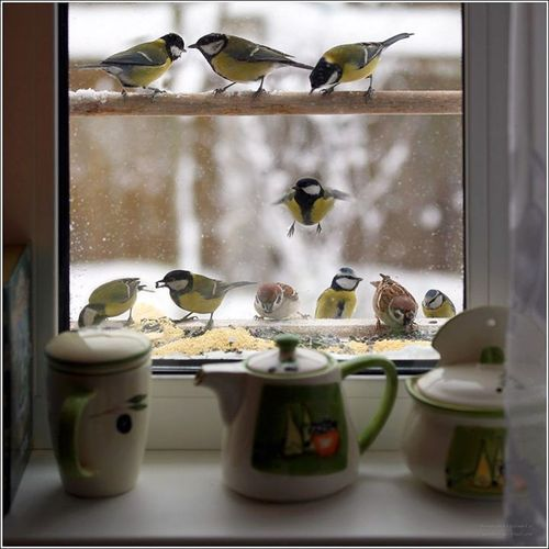 """Feeding feathered friends at the """"Cottage"""""""