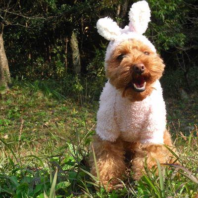 dog rabbit... | Cute animals/Animales bonitos | Pinterest