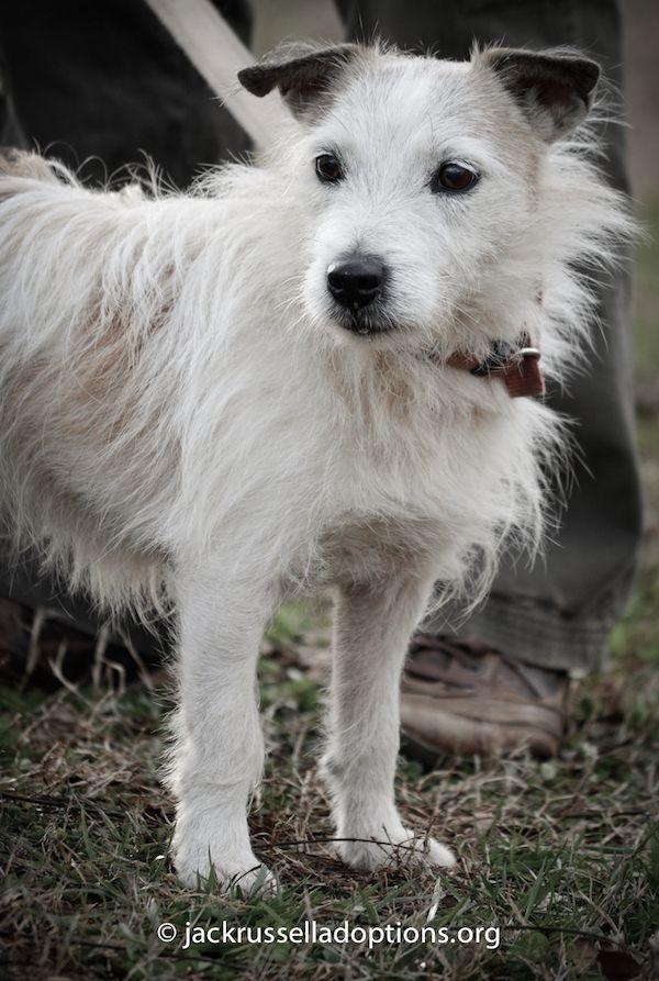 Rescue Dogs For Adoption In Georgia