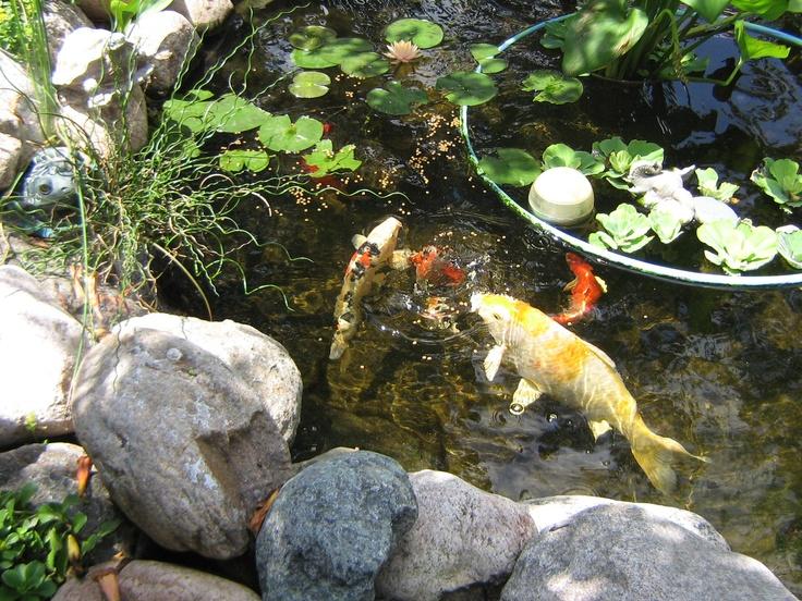 My pond koi crafts to make pinterest for My koi pond