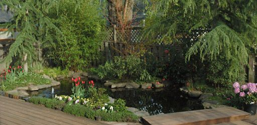 Epic pool pond conversion 1 outside pinterest for Turn pool into koi pond