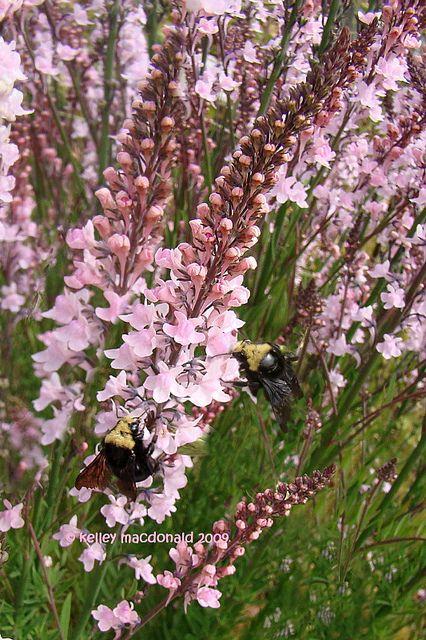 Pin by blythe on zone 5 gardening pinterest for Blythe le jardin