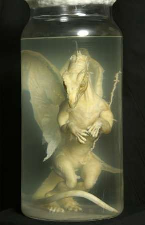 The baby dragon, in a sealed jar, was discovered with a metal tin containing paperwork in old-fashioned German of the 1890s.
