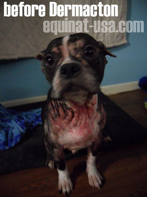 Dermacton Reviews Itchy Dogs With Red Sore Skin Hair