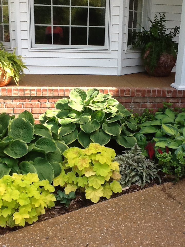Hosta garden garden pinterest for Plants for outdoor garden