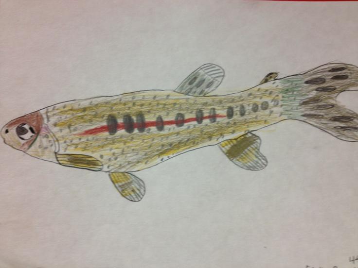 Colored pencil fish study Fourth Grade 2012 & 2013 Pinterest