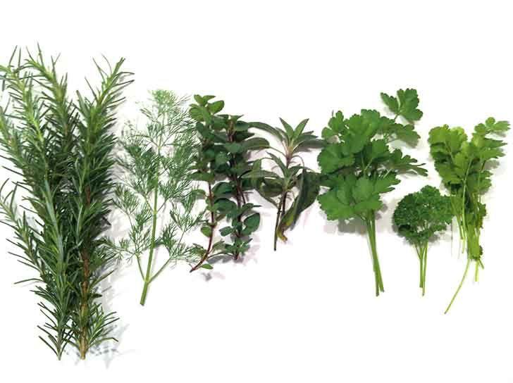 herb gardening for beginners Domestic Goddess Pinterest