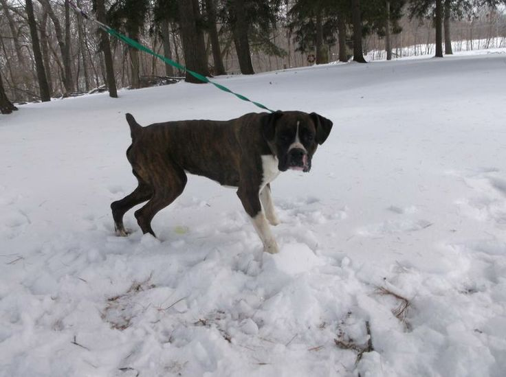 Pickaway County Dog Shelter Animals For Adoption