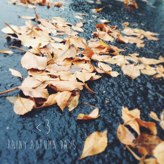8x8 rainy autumn days fall leaves orange by thelightproject 21 00