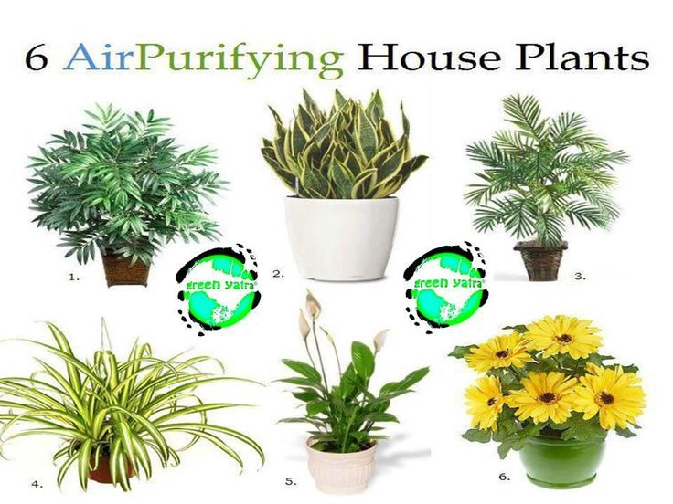 Six Air Purifying House Plants Personalise My Abode