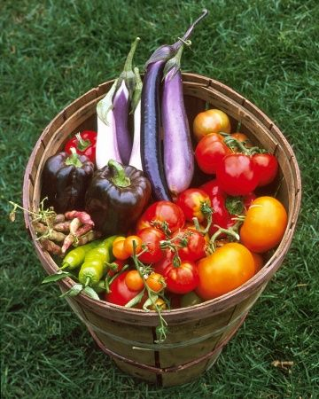 Warm-Season Crops: Tomatoes, eggplants, summer and winter squash, beans, and corn prefer summer's heat. Plant these only after the soil has warmed. Many warm-season crops require a long growing season and should be started indoors in late winter or early spring or purchased as seedlings ready to be transplanted.