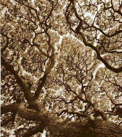Mara Tree, Anuradhapura, Sri Lanka #4 by Rena Bass Forman