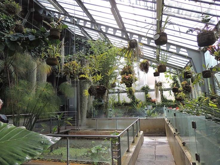 Invernadero santiago castroviejo bolibar zona tropical for Vivero el botanico