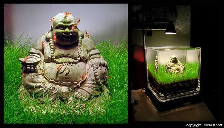 Buddha nano aquascape by Oliver Knott Aquascaping Pinterest