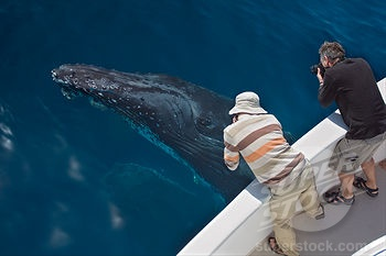 Whale watching--up close and personal.  This is in Baja, California
