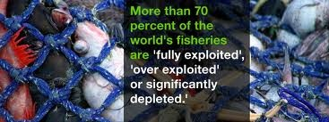 overfishing facts Overfishing Facts