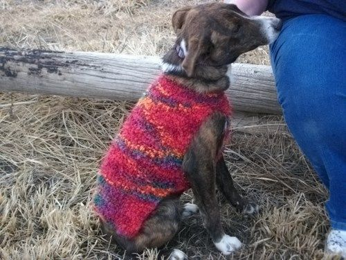 Really Easy Knitting Patterns : Really Easy Knit Dog Sweater Pattern #AF1321
