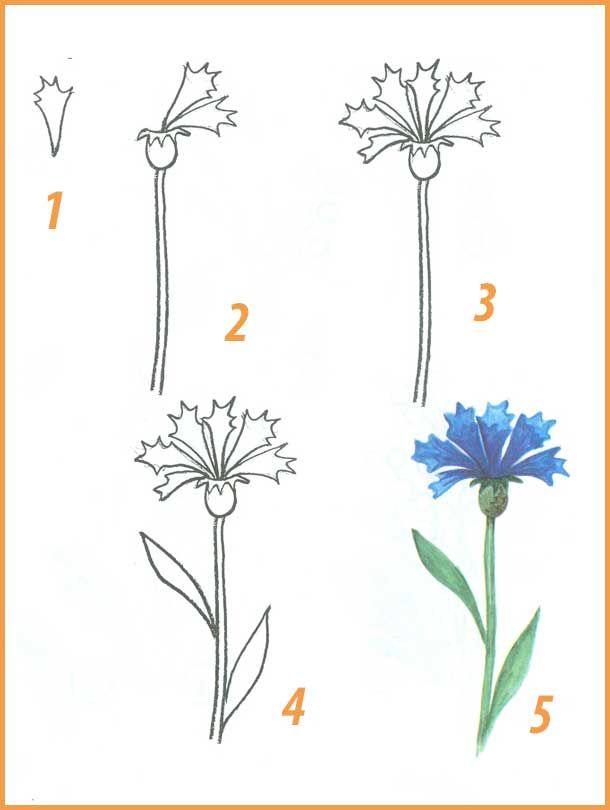 Поэтапное рисование цветов с фото