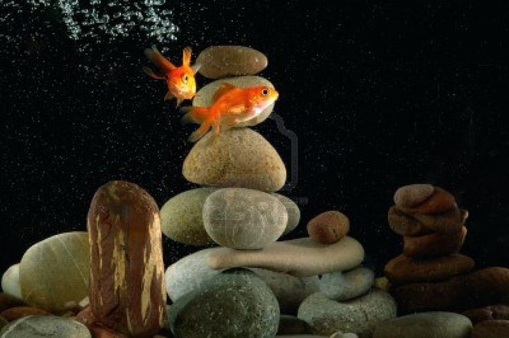 Pinterest for Zen fish tank