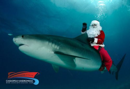 Merry Christmas Under the Sea