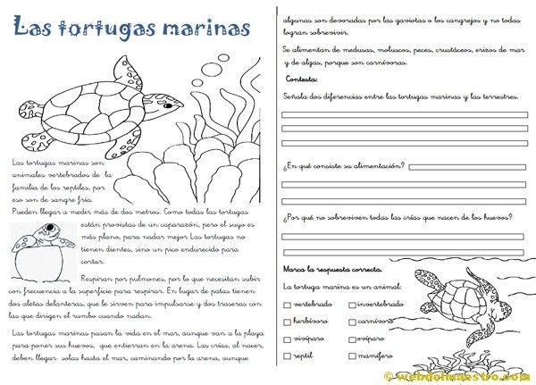 Ejercicios De Lectura En Espanol