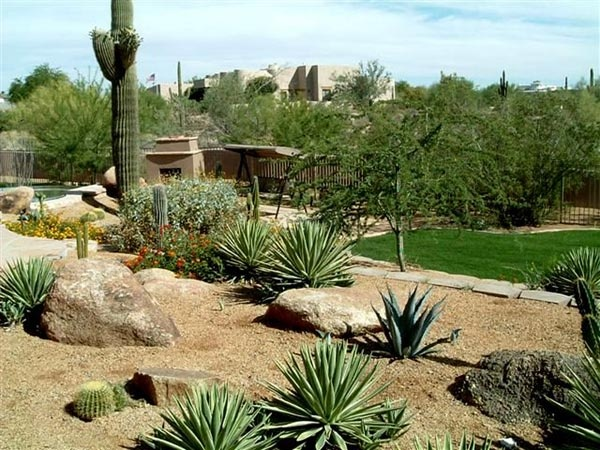424182858623844282 further Cactus Garden together with 362187995007552868 also 172614598194973349 in addition beautifyburque. on xeriscape landscaping ideas