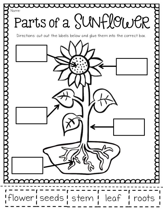 Parts Of A Plant Worksheet For First Grade Crazywidowfo