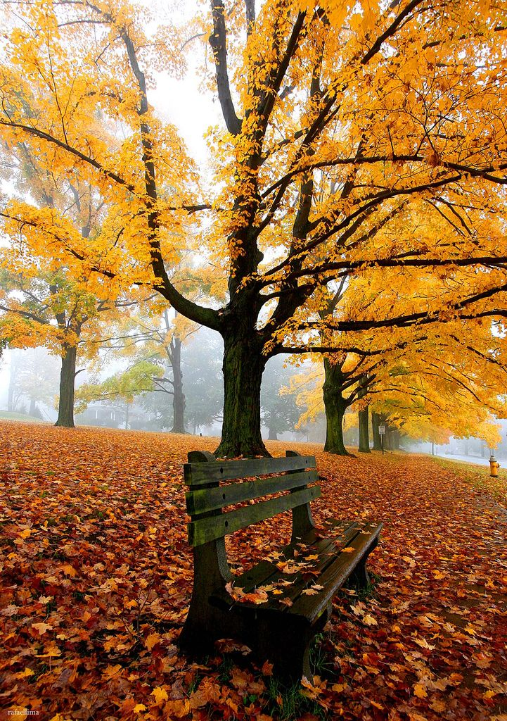 autumn leaves on bench - photo #16
