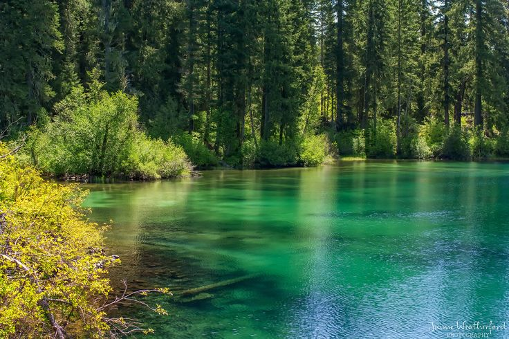 Clear lake oregon fishing and nature pinterest for Clear lake fishing