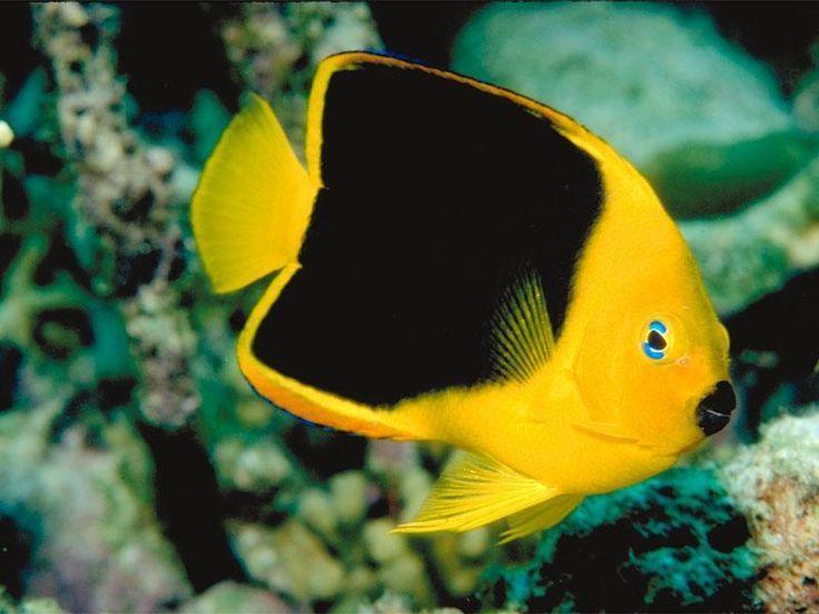Tropical Pet Fish : Tropical Fish Tropical Fish - Fish Photo (5412559) - Fanpop fanclubs
