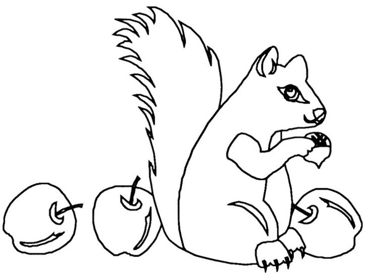 Squirrel Eat Apple Coloring Pages