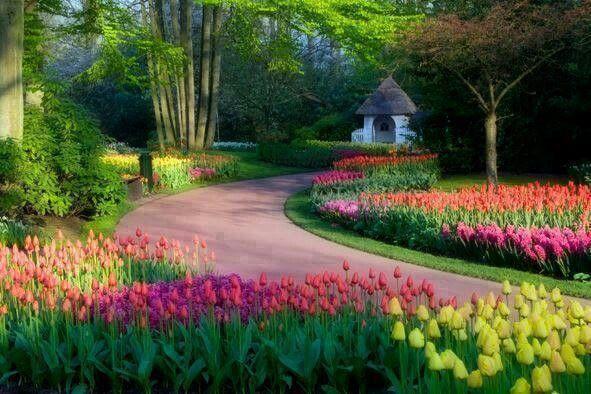 Tulip Garden In Amsterdam Everything Else Pinterest