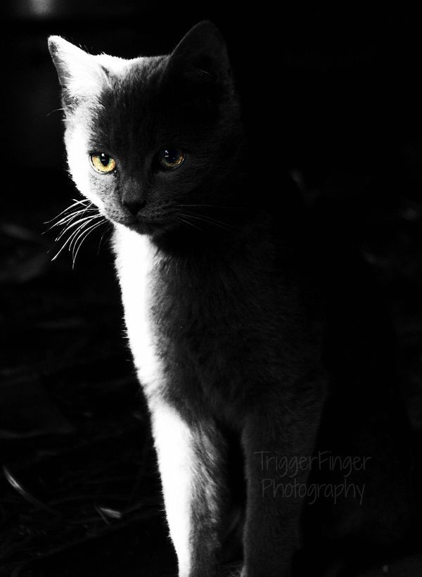 Shadow | Cats- Shadow Cats | Pinterest