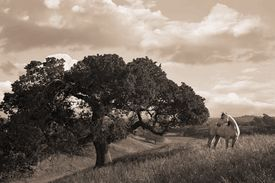 Robert Dawson - California Evening - Paper and Canvas Prints Available