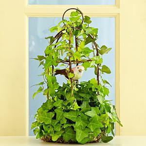 proflowers plants