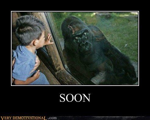 Soon Gorilla