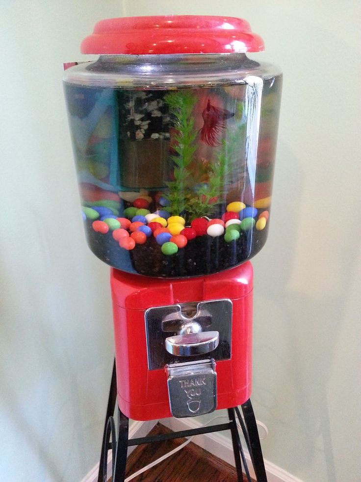 Pin by rhianna huizenga on make it better make it for Gumball machine fish tank