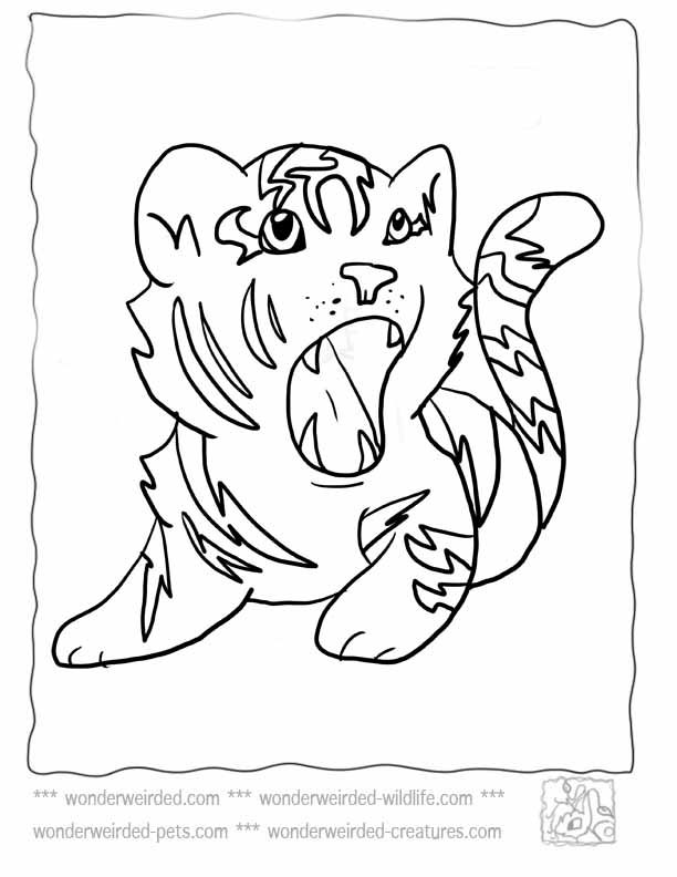 Baby tiger coloring pages at www wonderweirded wildlife com baby tiger