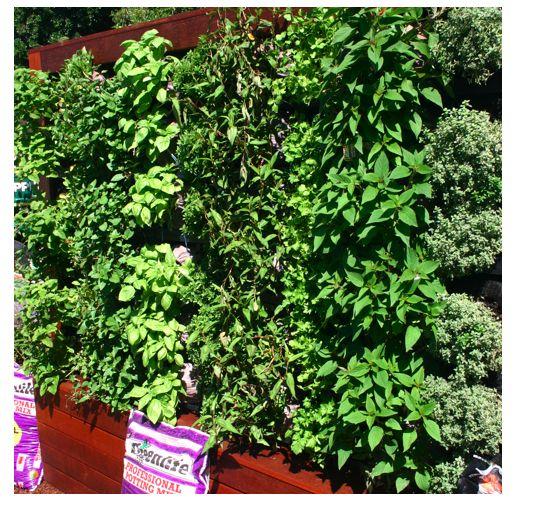 Vertical Garden Diy Pinterest
