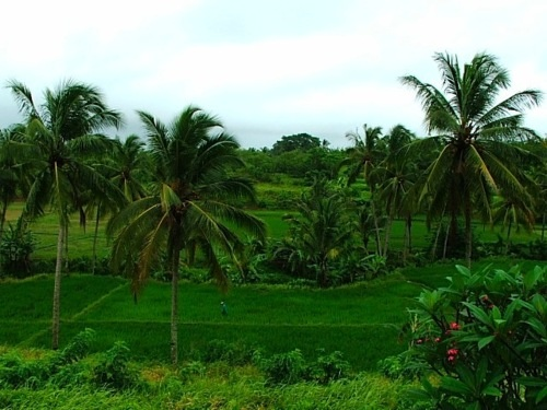 Anyer Indonesia  City pictures : Anyer Indonesia | My Pictures | Pinterest